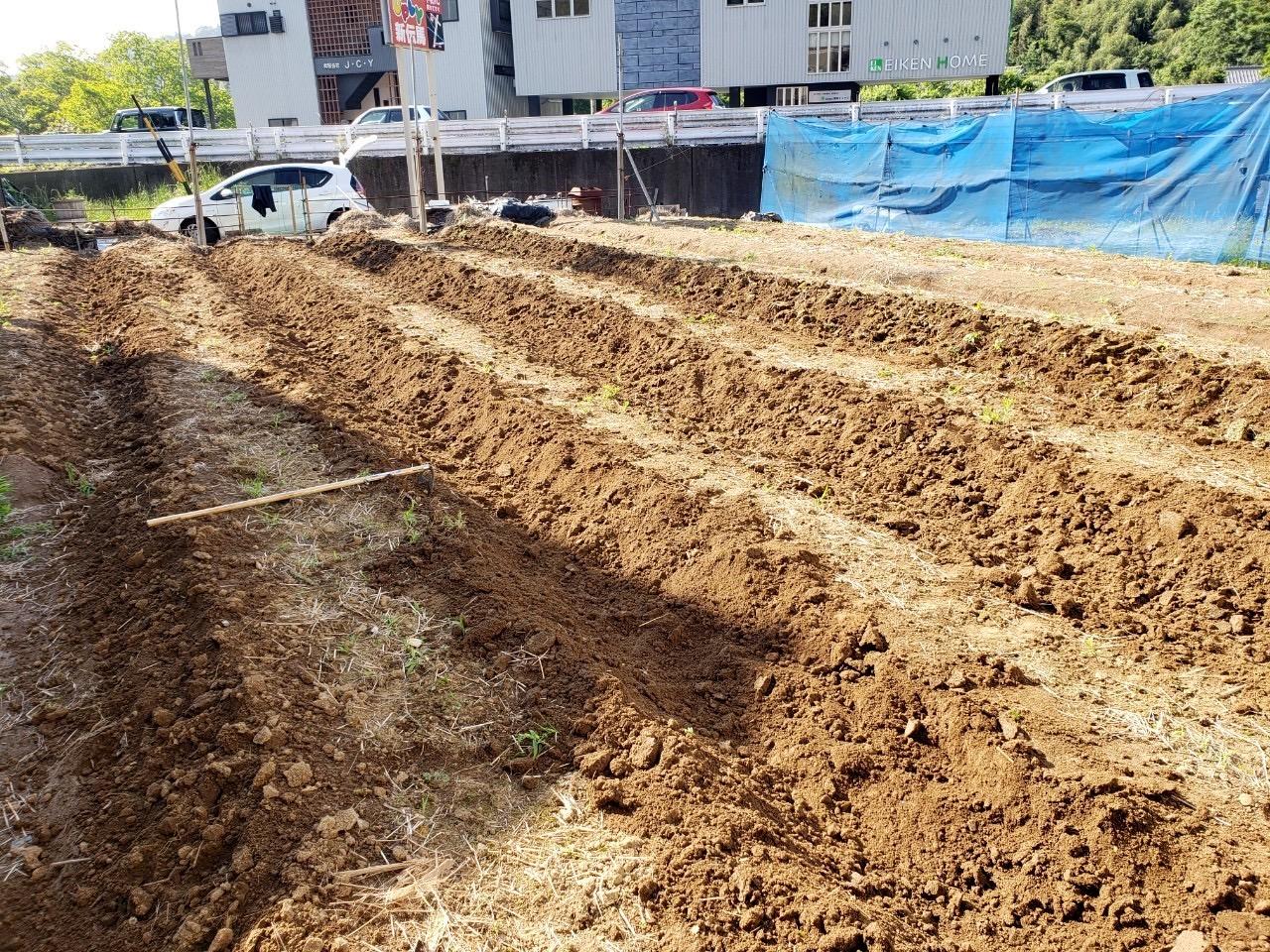 草むしりと畝の縁を耕す作業