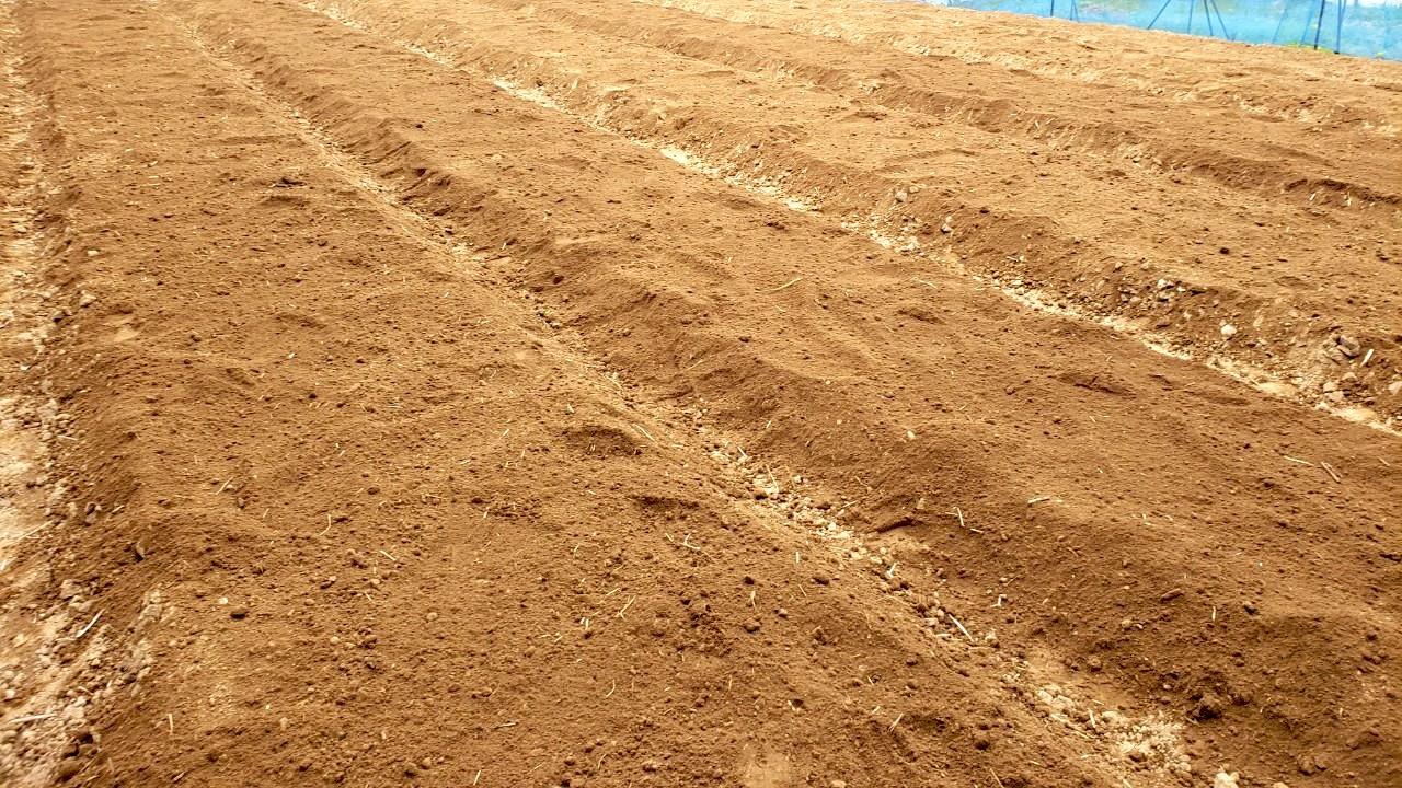 藍畑を耕し終えた状態