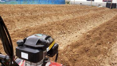 藍畑からこんにちは:耕運機大活躍、苗を植え込む準備が整いました