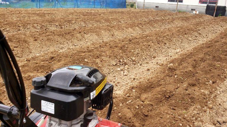 藍畑からこんにちは:藍畑を耕して苗を植え込む準備が整いました