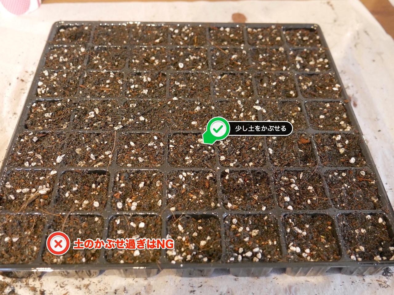 ほんの少し土をかぶせてOK:藍の種まき
