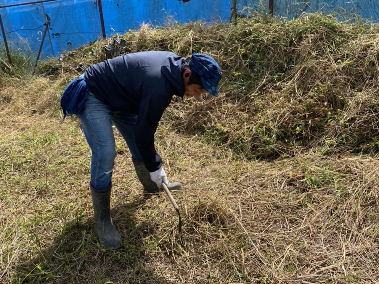 蒅をつくる場所を確保すべく草刈り